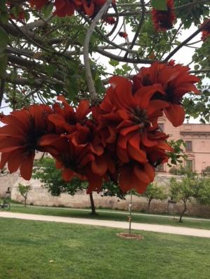 Lily tree